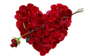 Valentine-Roses